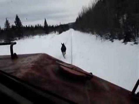 Сбитый лось обернулся для РЖД штрафом в 40 000 руб.