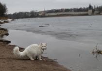 Как в Чернобыле: Роспотребнадзор нашёл в Псковской области радиоактивную воду